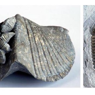 Fossils and Striations Take You Back in Time at Blue Creek