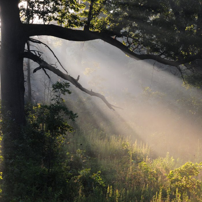 savanna-dawn-at-oak-openings-preserve-by-art-weberjpg