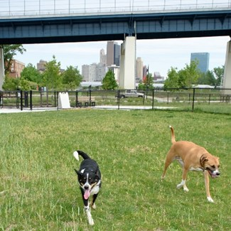 Paws in the Park, June 21 and August 26, is Happy Hour for People and Dogs